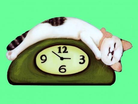 CATs paradise [2]