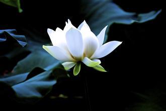 Interpretasi filsafat humanistik dengan disiplin ilmu Yin-Yang